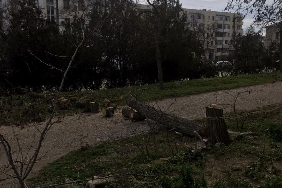 УК Наш Город начала спил аварийных деревьев