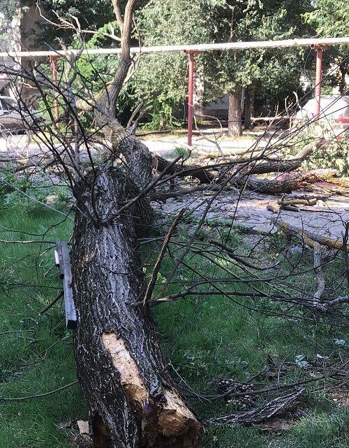 Студенческая, 6 и 8 — спил аварийных деревьев